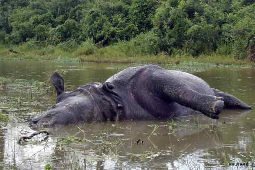 Assam: Rhino killed, horns removed in Kaziranga