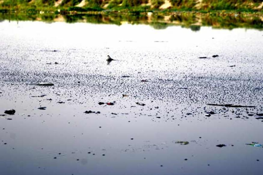 Half of Delhi's sewage released into Yamuna untreated: CAG