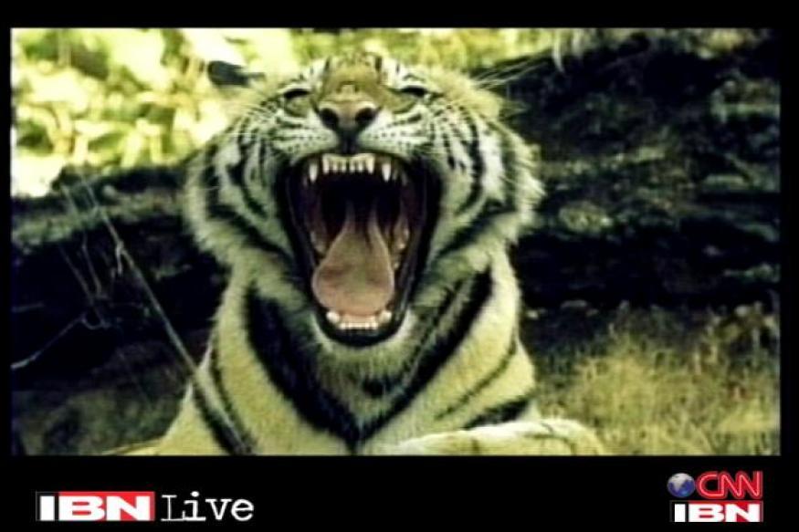 Third tiger found dead near Corbett in a week