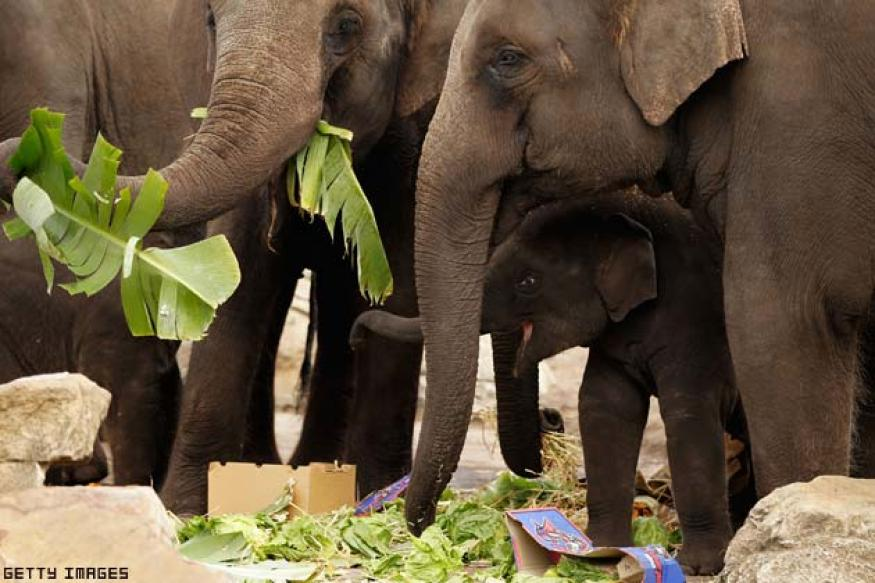Depleting forests force elephants to come closer to Bangalore