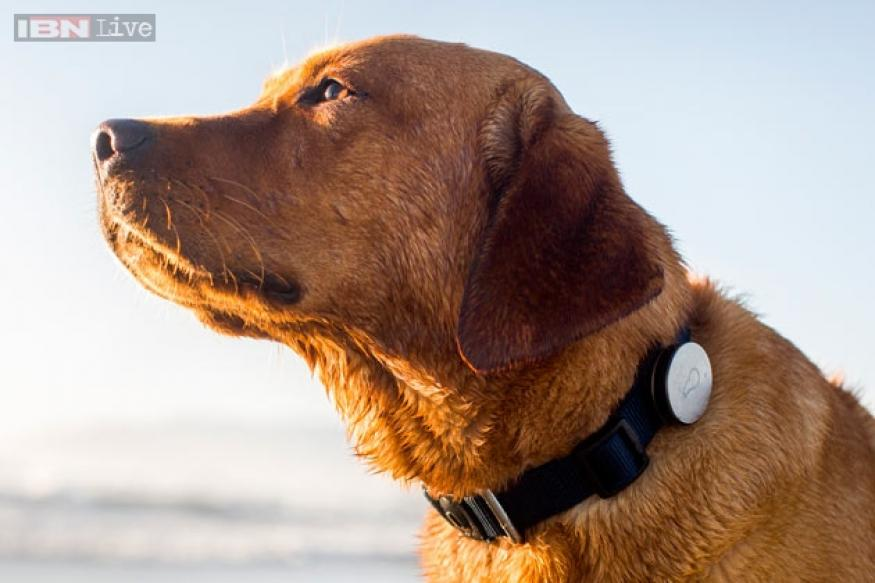 Bad news for lazy dogs: Here comes Whistle, a fitness tracker for dogs