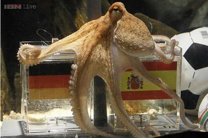 Do you miss Paul the Octopus? Meet the psychic animals predicting the FIFA World Cup 2014 winners this time!