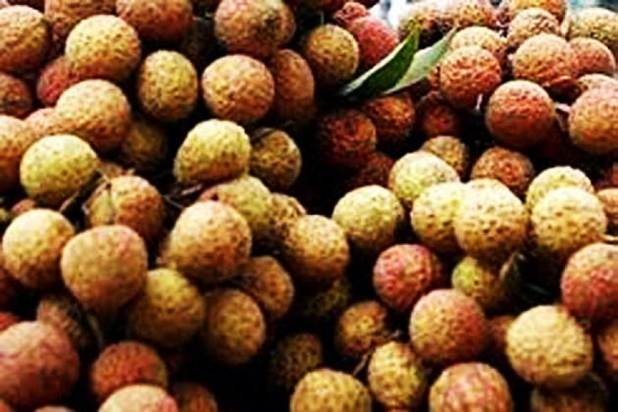 Indian town plagued with killer litchi fruit