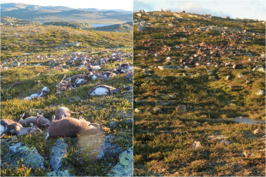 Lightning storm kills over 300 deer in Norway