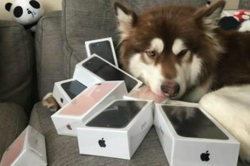 Son Of China's Richest Man Bought Eight iPhone 7 For His Dog