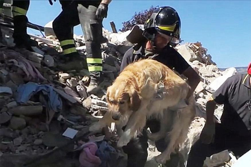 Dog Called Romeo Rescued from Rubble 10 Days After Italy Quake