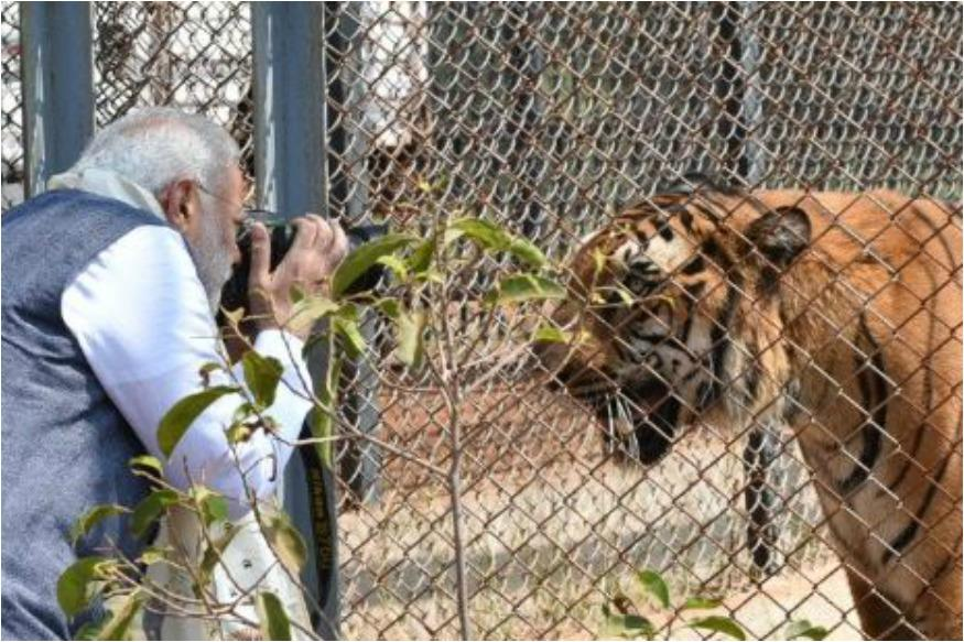PM Narendra Modi Turned Photographer For A Tiger, Twitter Had A Field Day